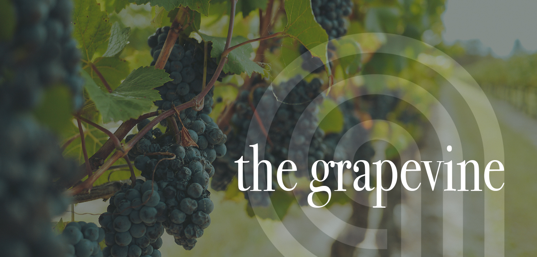 Abundance Grapevine Banner